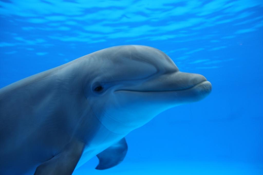 στρατηγική του δελφινιού ψυχολογια κοινωνιολογια